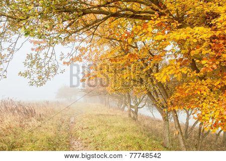 Misty Countryside