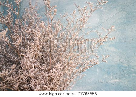Close Up Of Dried Flower Branches