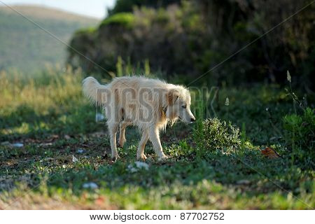 Grown up dog outside
