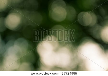 Natural Outdoors Bokeh Light Background, Yellow Tone In Hilight And Green Tone In Shadow