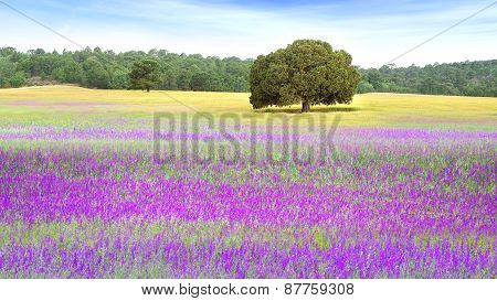 Picturesque nature rural landscape with fields.