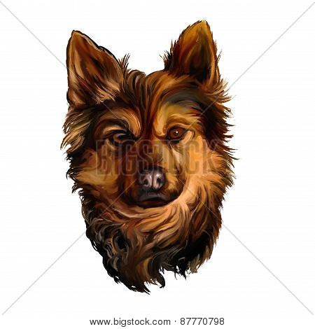 dog vector illustration  hand drawn  painted watercolor