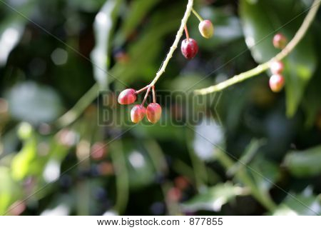 Colorful Autumn Berries