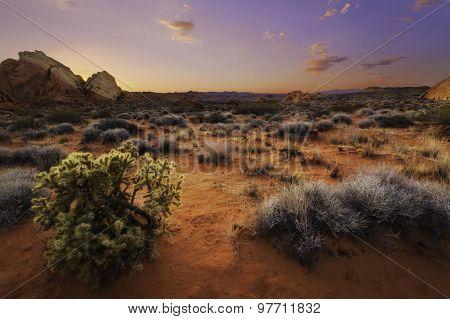 Desert Luminosity