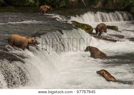 Five Bears Salmon Fishing At Brooks Falls