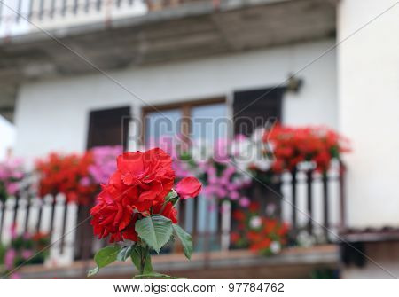Rose And A Mountain Home With Flowered Balcony With Geraniums