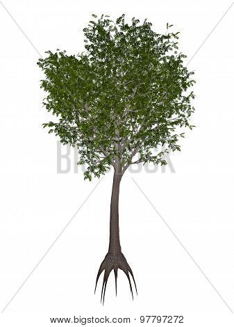 European or common ash, fraxinus excelsior tree - 3D render