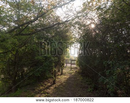 Lush Archway Through Nature Countryside To Walk And Ramble Through With Wooden Gate Entrance
