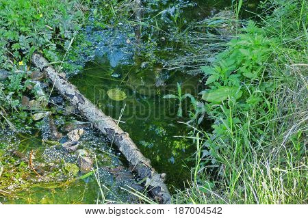 Little puddle with dark water among grass and leaves, with poplar fluff and branches. Soft focus.