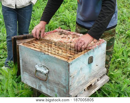 The beekeeper takes out the cell from the wooden hive. A lot of bees on the cell.