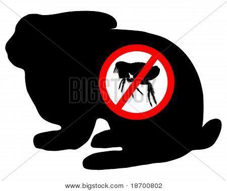 Bunny Flea Prohibited