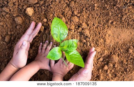 Agriculture and planting in spring gardening conceptClose up Kid hand and father planting young plant