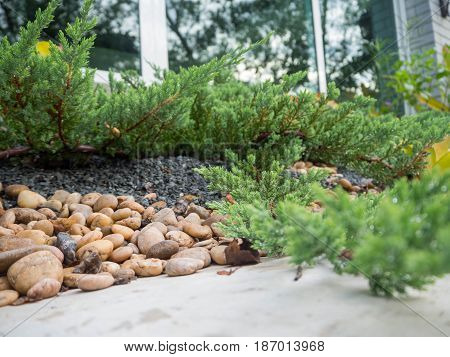 The small rock garden in front is the cement floor the side is a small tree around.