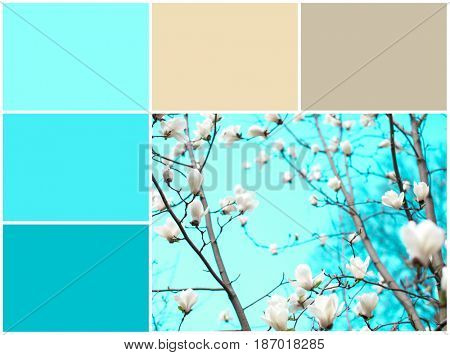 Mint color matching and tree branches with blooming flowers, closeup