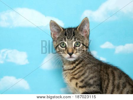 Portrait of a small tabby kitten looking slightly to viewers left. Body on the right side of the frame. Blue background sky with clouds.