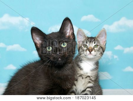 One black kitten with green eyes in foreground with gray and white tabby kitten in background both looking up above viewer. Focus on kitten in front. Blue background sky with clouds.