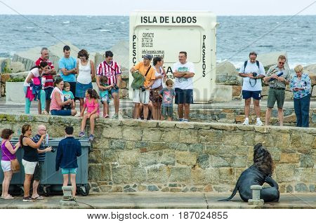 PUNTA DEL ESTE - URUGUAY, MARCH 3, 2017: Sea lion entertains tourists by posing for photos at the fishing dock of the popular resort city on the Atlantic coast.