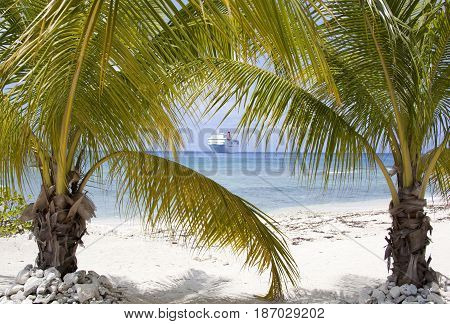 Palm Trees on Seven Mile Beach on Grand Cayman island (Cayman Islands).