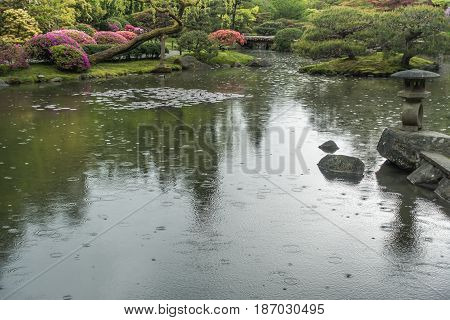 Raindrops hit the pond surface at a Seattle garden.