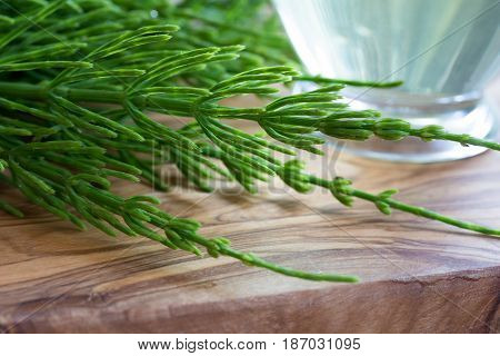 Fresh Horsetail With A Cup Of Horsetail Tea