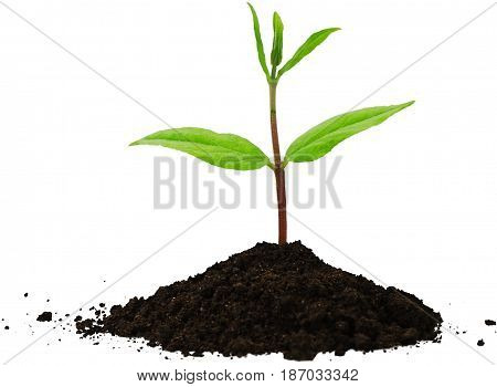 Plant growth seedling planting bud budding growing plant