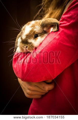An adorable, fluffy bunny is being hugged gently.