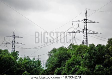 Photo of two power poles hiding behind green trees
