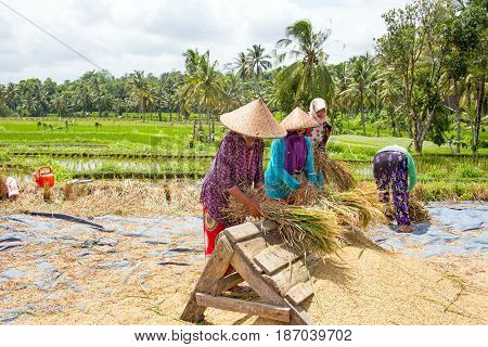 LOMBOK, INDONESIA - DECEMBER 29, 2016: Workers in the rice fields at work on Lombok, Indonesia the 29th of december 2016