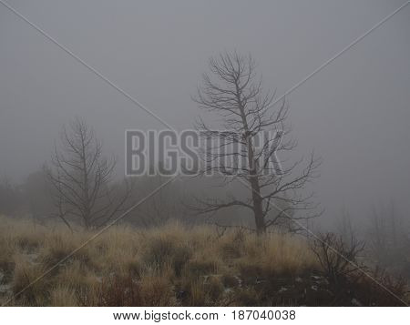 A pair of dead trees and wild grasses shrouded in an eerie fog on a winter day at Smith Rocks State Park in Central Oregon.