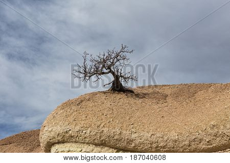 Lonely tree without leaves on the rock