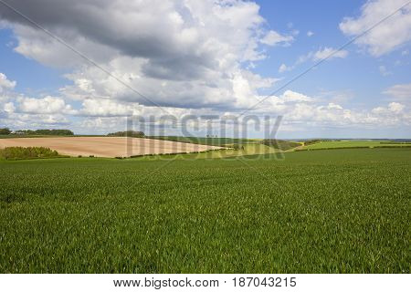 Scenic Wheatfields