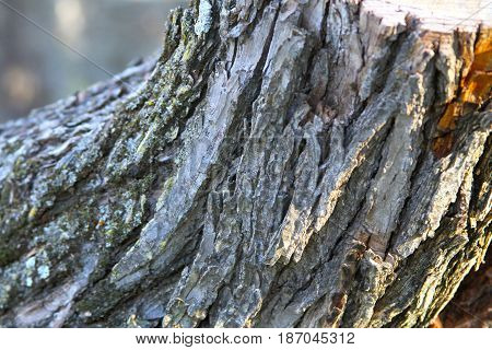 up close tree trunk bark with brown highlights