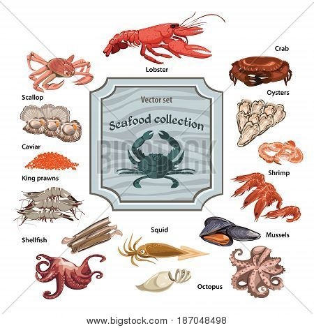 Colorful hand drawn seafood icons set with sea and ocean animals and creatures isolated vector illustration