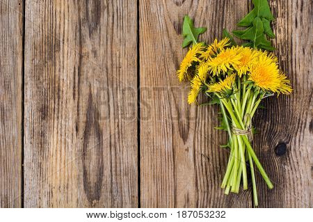 Bunch of yellow dandelions on wooden background. Studio Photo