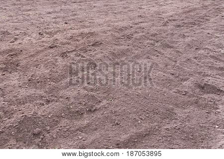 Just Dug Up A Field Ready For Planting Potatoes