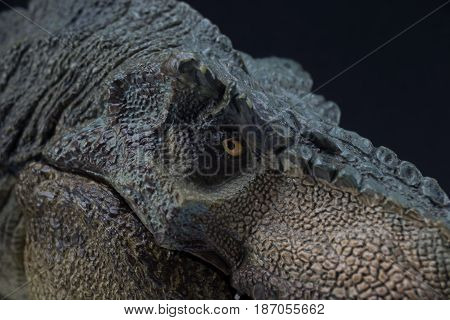 Macro Head Shot Of Green Dinosaur Tyrannosaurus Rex With Close Mouth Staring The Prey  - Black Backg