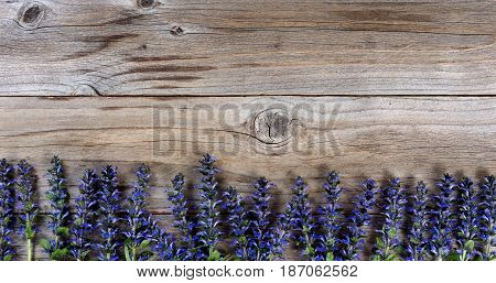 Wild purple spring flowers forming bottom border on rustic wood. Flat lay view with copy space available.