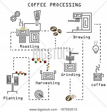 coffee processing step by step , coffee diagram