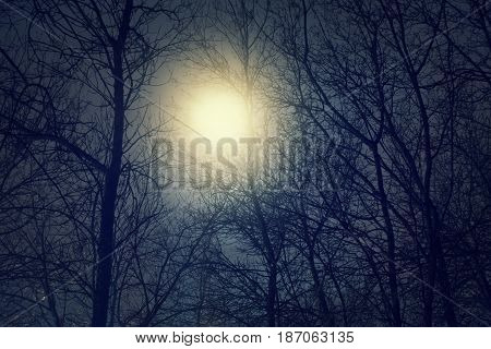 Full moon and clouds at midnight. Dark scenery with naked trees.