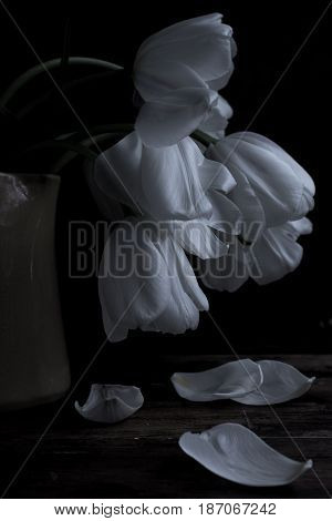 Romantic white tulips in a yellow vase on a black background