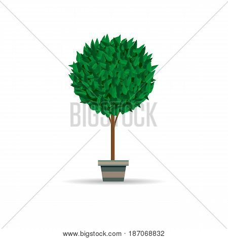 Home bush plant in pot culture on white background and set of indoor home plant and tree in pots