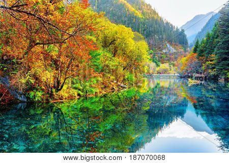 The Five Flower Lake. Autumn Forest Reflected In Water