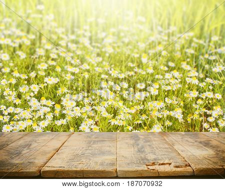 Empty wooden table for display natural background with daisies sunny day