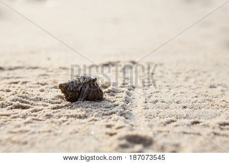 Small hermit crab on the tropical island sand. Copy spaceclose up; Hermit crab on tropical beach.