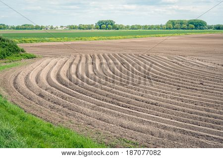 Curved potato ridges in a Dutch polder landscape. The seed potatoes have just been sown. It is spring now.