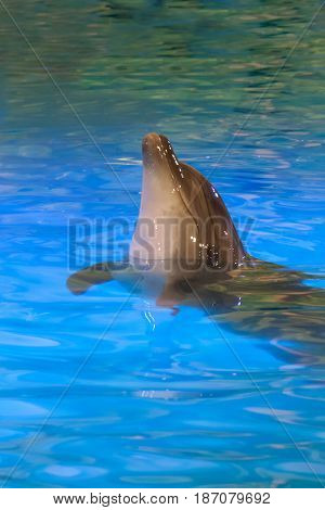 Portrait Of The Beautiful Young Dolphin