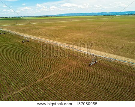 Agricultural irrigation system on cultivated sugar beet plantation viewed from drone point of view