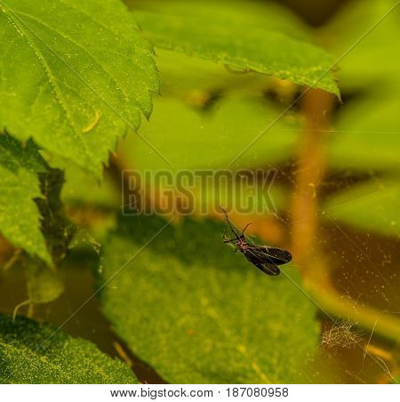 Closeup of a small flying creature caught in a spider web with a soft blurred background