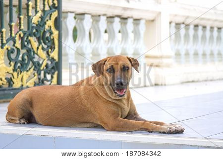 Mixed Breeds dog of brown on daylight