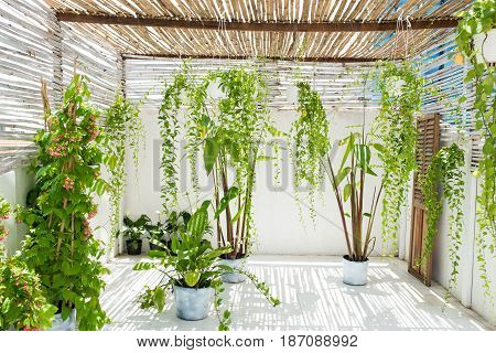 Garden on balcony with green plants at home.